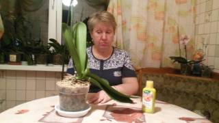 Королевская орхидея: спасение)))(удобрение я использую FORTE #1., 2016-11-05T16:07:50.000Z)