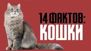 14 познавательных фактов о кошках и породистых котах