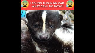 Facebook Car Freshener Ad