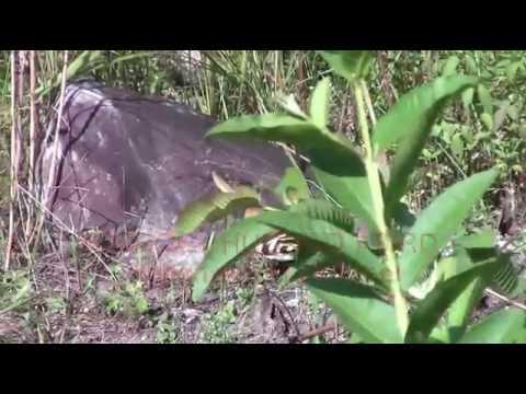 Sang Burung Kesayangan Nabi Sulaiman Burung Hud Hud Youtube