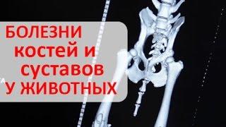 Суставы животных. Лечение заболеваний костей и суставов у домашних животных.