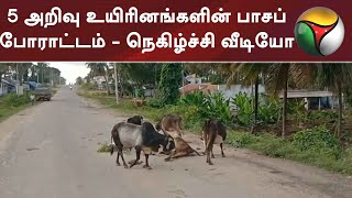 5 அறிவு உயிரினங்களின் பாசப் போராட்டம் - நெகிழ்ச்சி வீடியோ | Cow | Viral Video