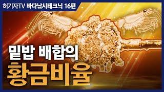 감성돔낚시 밑밥 배합법 ... 크릴:집어제:압맥의 황금…