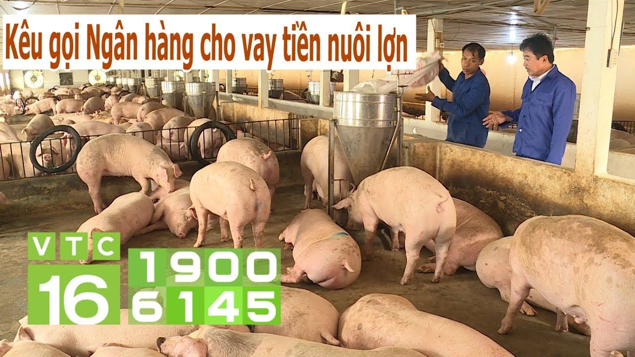 Giá lợn còn tăng, nuôi lợn lãi lớn trong vòng 1 năm tới?   VTC16