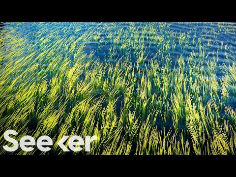 How Seaweed Could Slow Down Climate Change