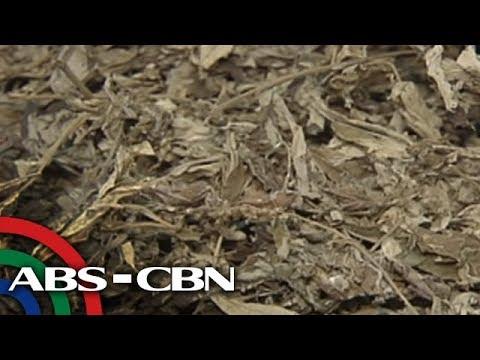 News Patrol: Medical marijuana, legal nga ba sa Pilipinas?