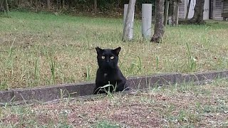 この黒猫、凄い人懐っこいです。足元にスリスリかわいいです。 オススメ...