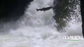 Idaho the Movie 2, Selway Falls