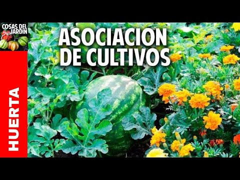 Cómo es la asociación de cultivos - Son 3 trucos y entendés todo @cosasdeljardin - 2
