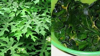 "THIS PLANT IS CALLED ""GOD'S GIFT"" AS IT CAN CURE DISEASES!"