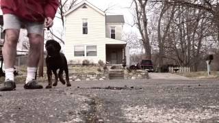 Dog Bootcamp   Obedience Training Cincinnati Ohio   Leon The Rottweiler
