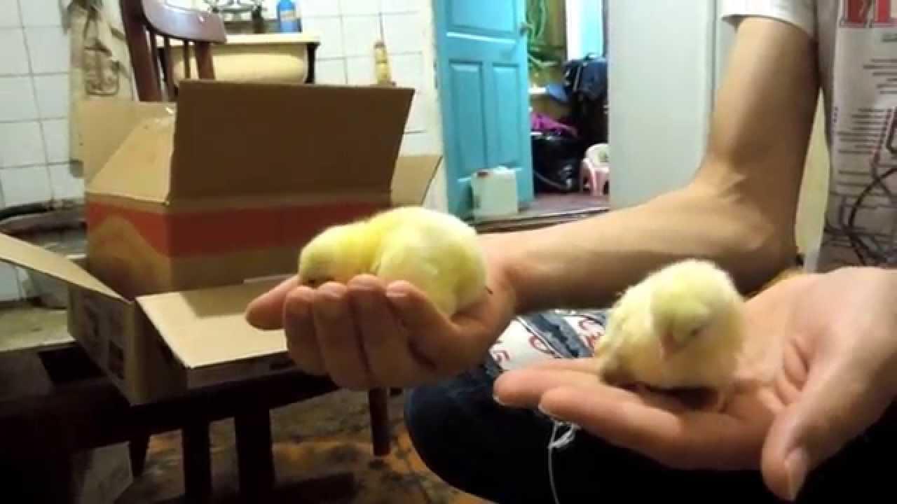 Продам бройлерных индюков (тушки). Вес от 10 кг. Поилки для птицы купить. Ниппельные поилки для птиц(кур, перепелов, цыплят, бройлеров).