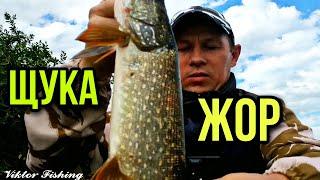 ЖОР ЩУКИ И ОКУНЯ После НЕРЕСТА Рыбалка на ВЕРТУШКУ