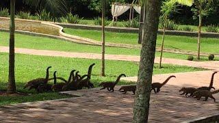 Девушка опешила, когда увидела стадо динозавров из окна, но протерев глаза она поняла, что ошиблась