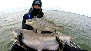 Multi-Species Swimbait CHALLENGE in a Snow Storm!!!