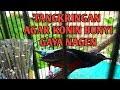 Tips Memilih Tangkringan Burung Kolibri Ninja  Mp3 - Mp4 Download