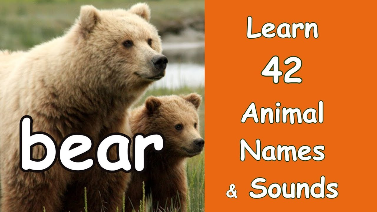 42 Animal Sounds with Names and Pictures