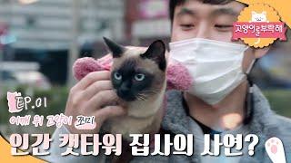고양이를 부탁해 - 내 어깨 위 고양이 쪼미_#001