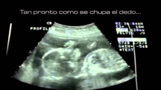 El Milagro De La Vida - 25 De Marzo, Día Del Niño Por Nacer