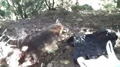 Where Possums Nest.