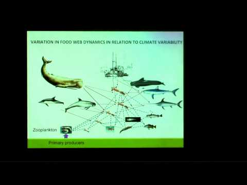 Dr. Iliana Ruiz-Cooley presents: Tracing animal movement and changes in ocean biochemistry