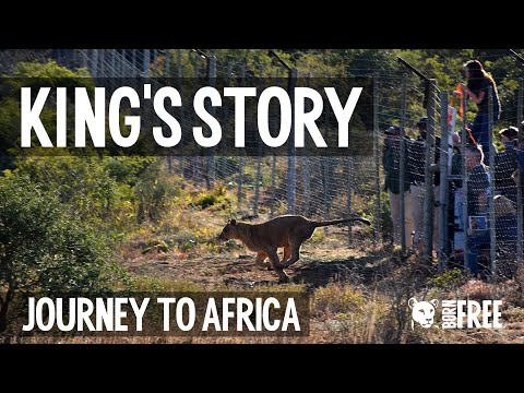 King's Story: Journey to Africa