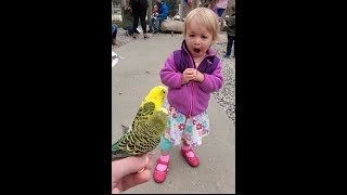 Toddler reacts to parakeet encounter at petting zoo