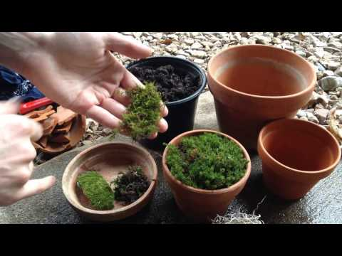 Growing Moss in Containers