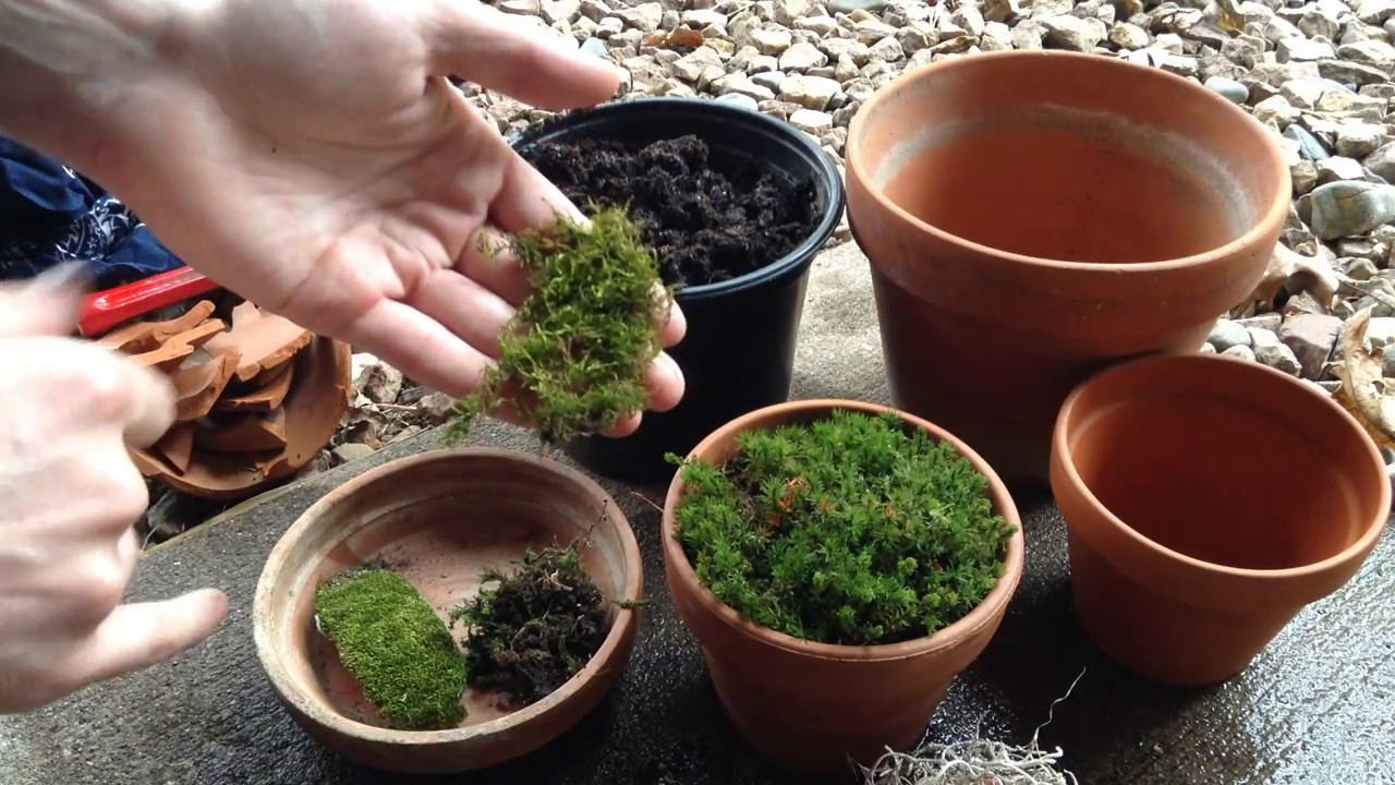 Growing Moss In Containers Youtube