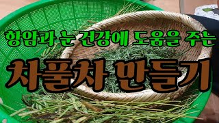 #항암효과와 눈건강에 도움을 주는 야생 결명자 (차풀차…