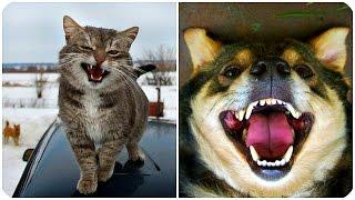 Смешные Животные 2016! Забавная Видео Подборка / Funny Animals 2016/