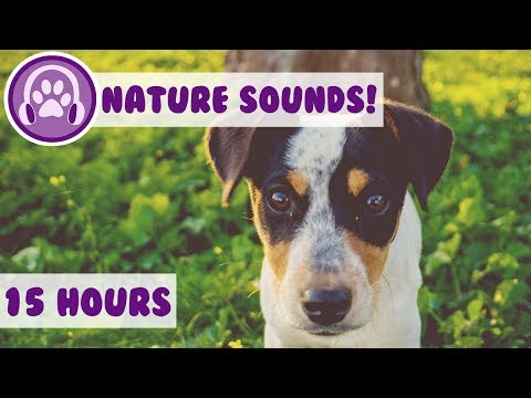 Calming Nature Sound For Dogs! Desensitise Your Dog With Sound Effects Designed For Anxious Puppies