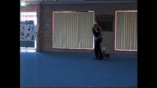 "Dancing Min Pin ""alfa"" In Canine Freestyle, Sydney Australia Sep-09"