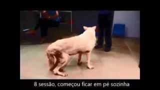 Fisioterapia veterinária mundoaparte.com.br