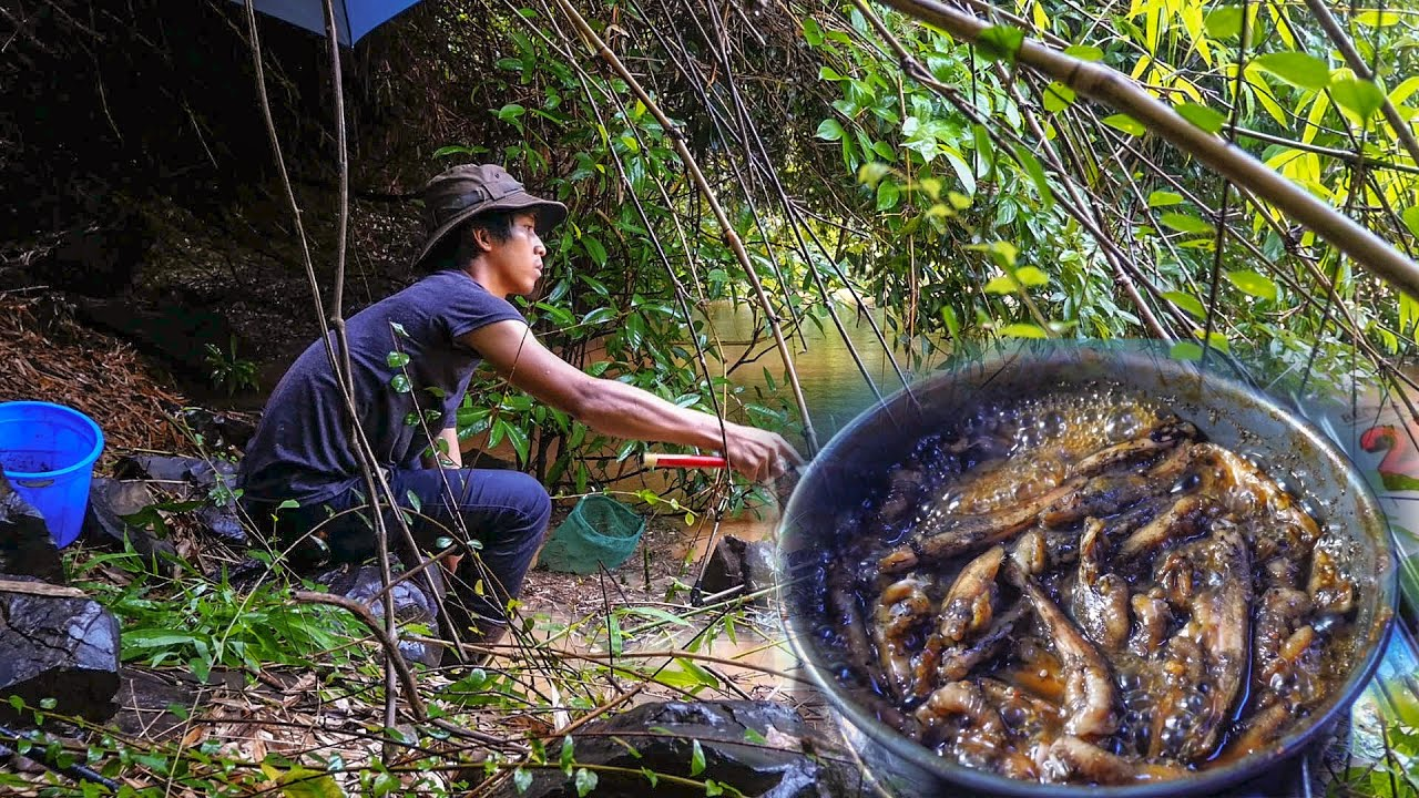 Đội mưa giật cá suối về nấu cơm chiều ✅