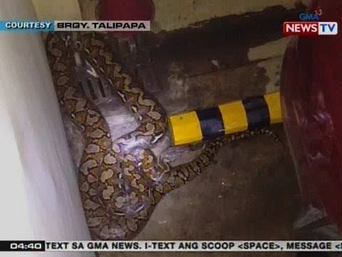 BP: Abot sa 15-ft. na sawa, natagpuan sa parking lot ng condo sa QC