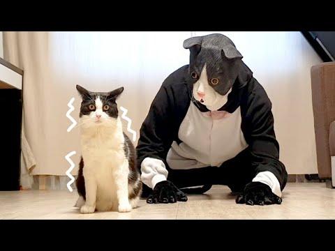 Cat Pranked By Big Cat Mask