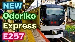【東海道線にE257系の新型踊り子が出現!】JR横浜駅3番線にE257系の新型踊り子が出現!