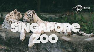 Mi zoológico favorito del mundo! Singapur #2