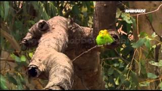 Muhabbet Kuşu ve Papağanlar Belgeseli (Yeni)