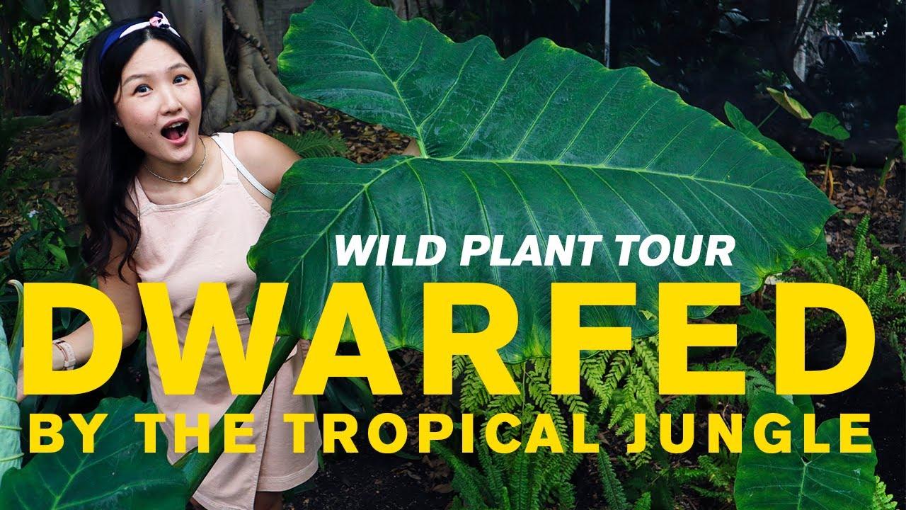 Rare Tropical Plant Greenhouse Tour