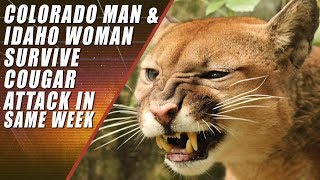 Runner Kills Mountain Lion with Bare Hands