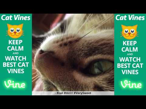 Funniest Cat Vines #116 - Updated September 14th, 2015