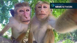 These monkeys take better selfies than you do