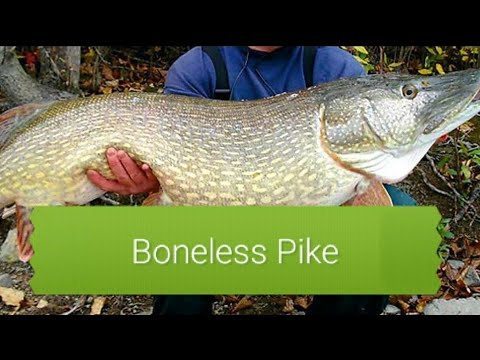 How to fillet a Northern Pike with no Bones