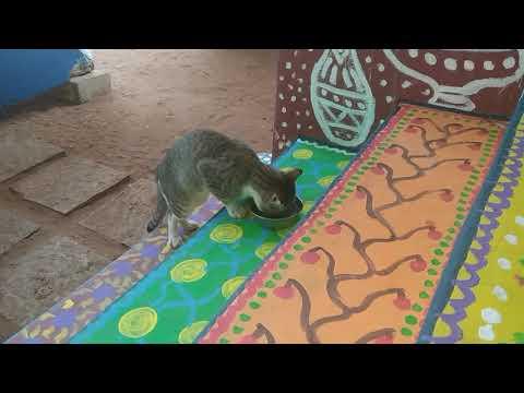 Милый и умный котик любитель печенья, пережил стресс. Мария Карпинская и её питомцы в Индии