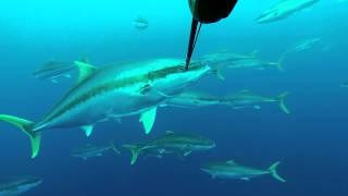 Three Kings Spearfishing Trip