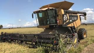 2019 rice harvest
