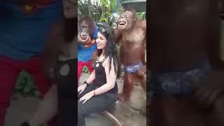 Download Video Orang hutan pegang memek bule MP3 3GP MP4