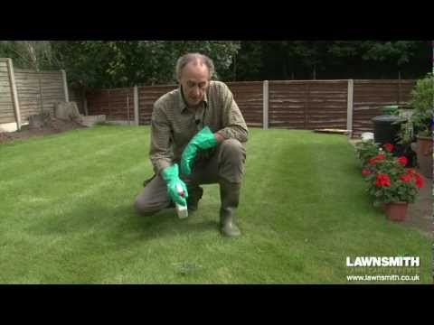 how-to-spot-spray-weeds-in-the-lawn